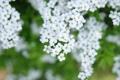 Картинка цветы, ветки, весна, белые