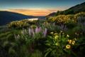 Картинка пейзаж, цветы, горы, долина
