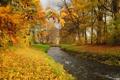 Картинка листья, лес, осень, деревья, ручей, река