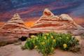 Картинка закат, цветы, горы, природа