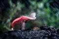 Картинка лес, макро, дождь, гриб, боке