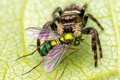 Картинка паук, глаза, муха, лист, насекомые