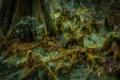 Картинка лес, трава, дерево