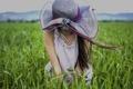 Картинка поле, девушка, ветер, шляпка