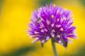 Картинка природа, цветок, насекомое, краски, лепестки