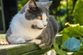 Картинка кошка, отдых, доска, котэ