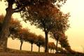 Картинка trees, Autumn, alley, Below