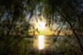 Картинка закат, деревья, небо, озеро, вечер