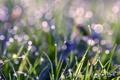 Картинка зелень, трава, вода, капли, макро, свет, роса