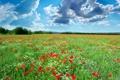 Картинка пейзаж, трава, деревья, природа, голубое небо, цветы