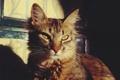 Картинка кошка, кот, взгляд, серый, в полоску
