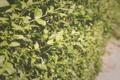 Картинка зелень, лето, листья, куст