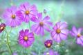 Картинка поле, капли, природа, роса, лепестки, луг