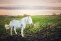Картинка поле, природа, конь