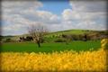 Картинка поле, небо, деревья, цветы, холмы