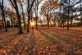 Картинка осень, листья, солнце, деревья, парк