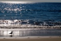 Картинка море, природа, берег, утро, Canon G12