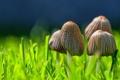 Картинка лето, природа, Mushrooms