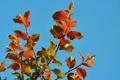 Картинка осень, небо, листья, краски, ветка