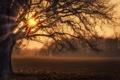 Картинка осень, свет, дерево