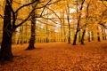 Картинка осень, лес, природа, парк, листва, посадка