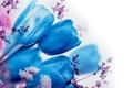 Картинка макро, весна, лепестки, тюльпаны