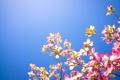 Картинка небо, цветы, природа