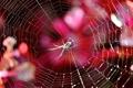 Картинка свет, природа, паутина, паук