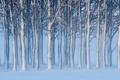Картинка снег, деревья, пейзаж
