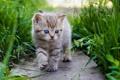Картинка кошка, лето, трава