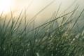Картинка трава, солнце, стебли