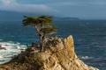 Картинка Тихий океан, Калифорния, Pacific, кипарис, дерево, скала, побережье
