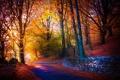 Картинка дорога, осень, деревья, парк, листва