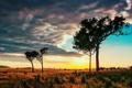 Картинка небо, облака, деревья, закат, горы, горизонт, саванна