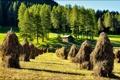 Картинка лес, небо, луг, поле, дом, копна, сено