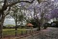 Картинка дерево, весна, spring