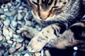 Картинка кот, котяра, кошак, фон, лапки, усы
