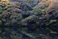 Картинка лес, деревья, озеро, отражение