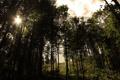 Картинка лес, трава, небо, солнце, лучи