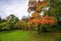Картинка листья, осень, трава, деревья, парк, тропинка