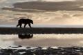 Картинка животные, небо, природа, река, камни, берег, медведь