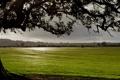 Картинка поле, облака, дерево
