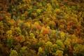 Картинка осень, листья, деревья, природа, леса, осенние обои