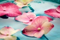 Картинка вода, капли, цветы, гортензия