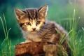 Картинка кошка, кот, котенок, пень, cat