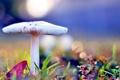 Картинка осень, трава, макро, блики, гриб, ярко, боке
