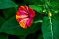 Картинка цветок, листья, природа, лепестки