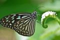 Картинка цветок, крылья, насекомое, бабочка