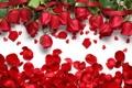 Картинка розы, лепестки, сердечки, red, love, flowers, hearts