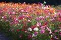 Картинка поляна, фокус, разноцветные, много